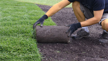 lawn grass seed gardener